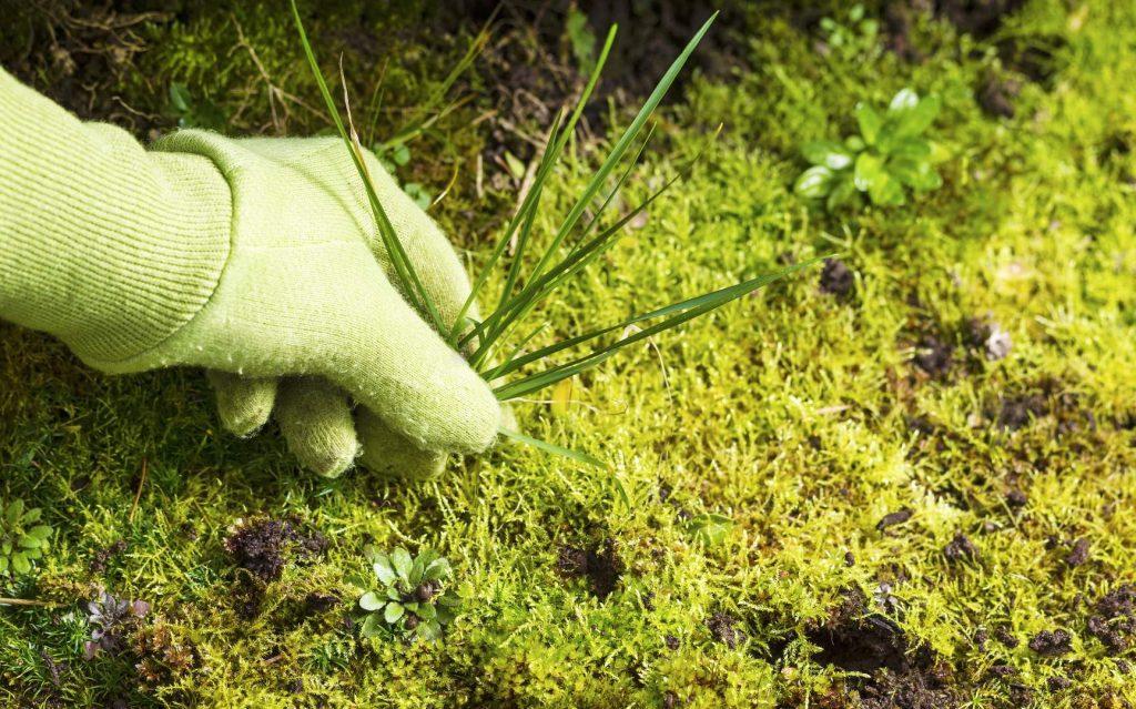 10 Most Effective Crabgrass Killers – Get Rid of Pesky Weeds in Your Garden!