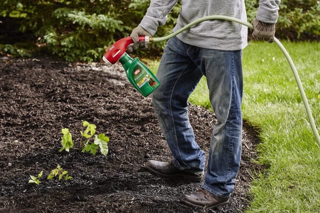 5 Best Poison Ivy Killers - Make It Safe Way