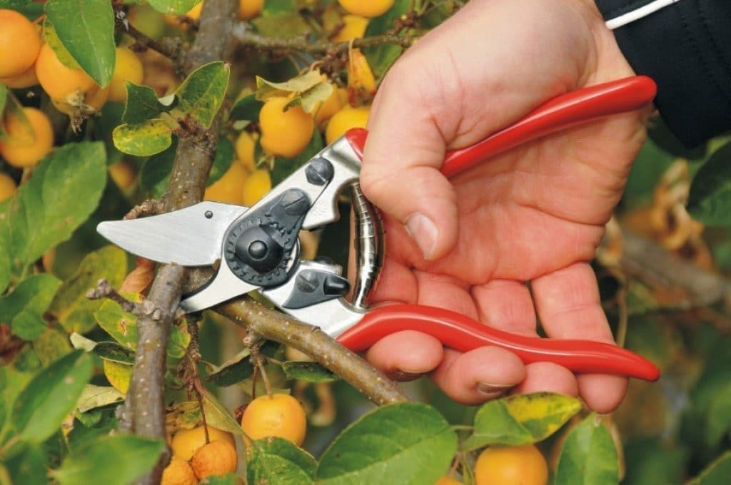 10 Best Pruning Shears - Get the Right Tool for the Job!