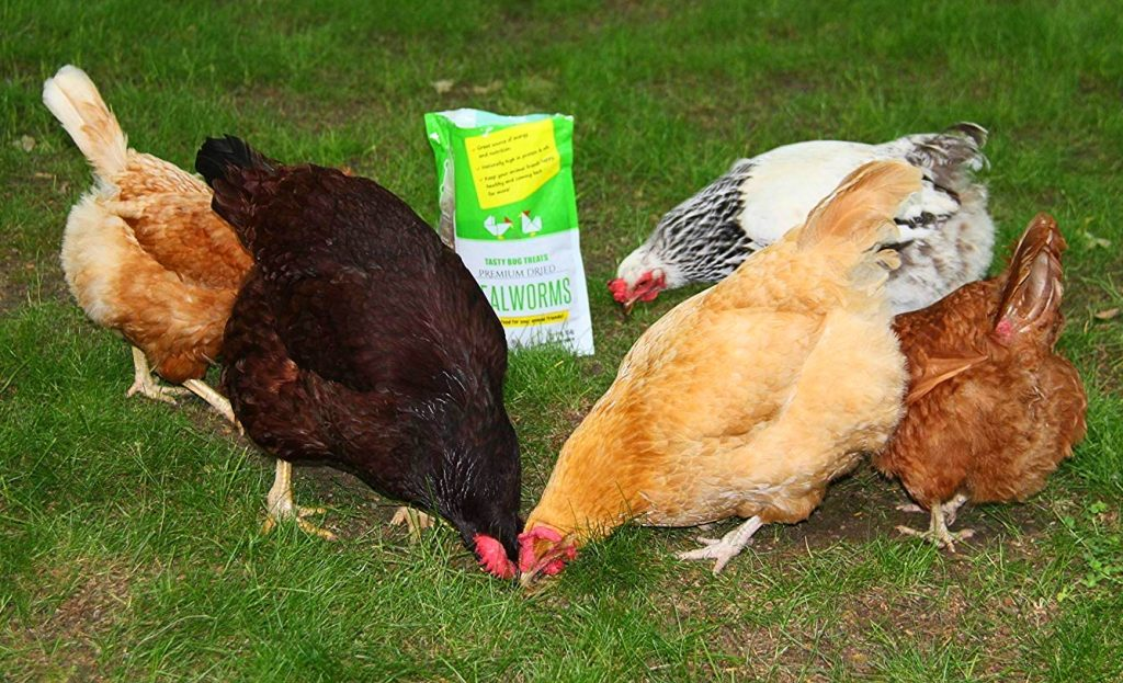 8 Best Chicken Feeds - Give The Best To Your Flock!