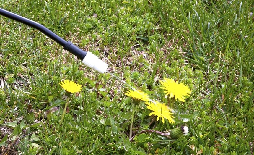 12 Best Weed Killers for Lawns - Just Grass And Nothing Else!