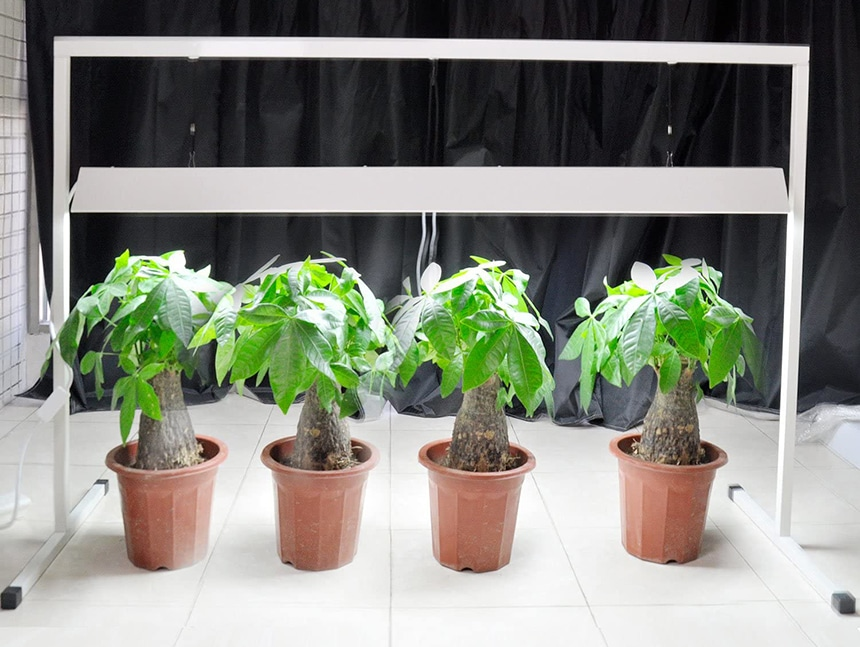 10 Best Grow Lights for Seedlings – Speed Up the Growth of Your Plants!