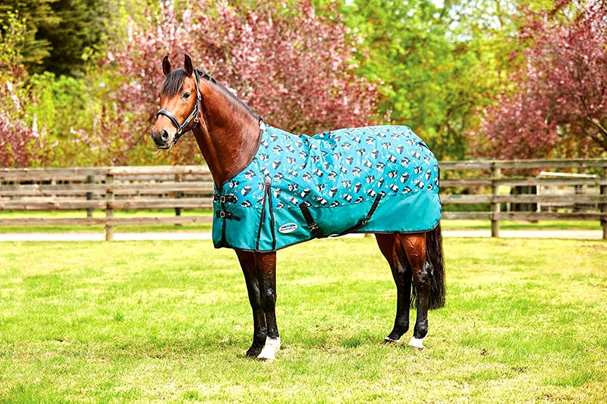 6 Best Horse Blankets - No More Trouble No Matter The Weather