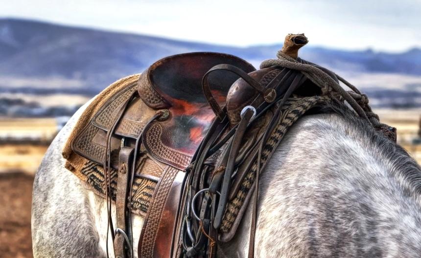 5 Best Trail Saddles - Your Pleasure Saddle