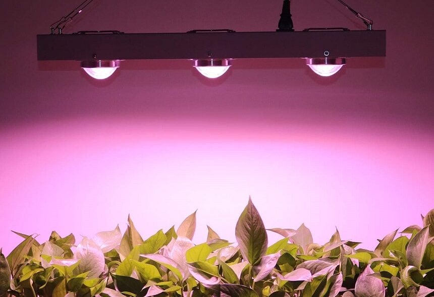 10 Best COB LED Grow Lights - Even More Efficient Growth