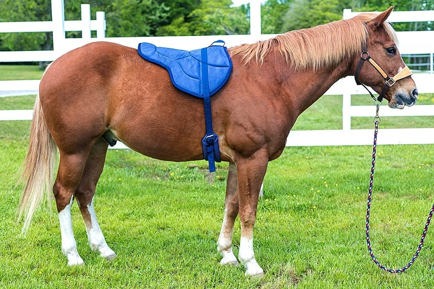 10 Best Saddle Pads - New Level of Comfort