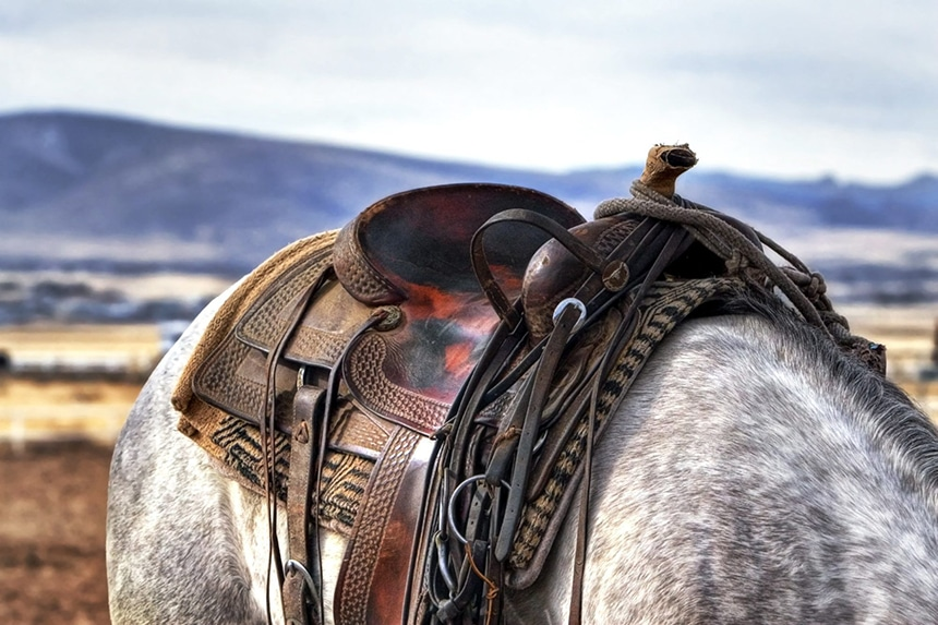 5 Best Horse Saddles - All You Need for Comfort