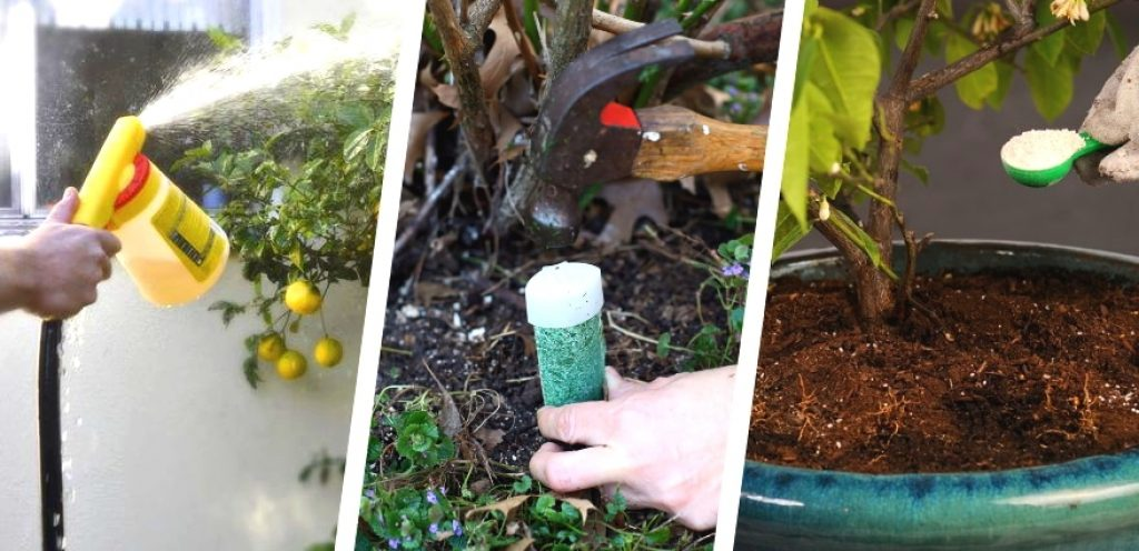 5 Best Fertilizers for Citrus Trees to Grow Healthy and Delicious Fruits