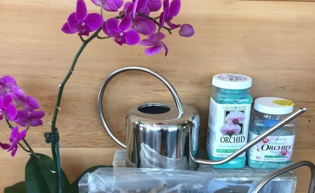 5 Wonderful Fertilizers for Orchids to Boost the Blooming