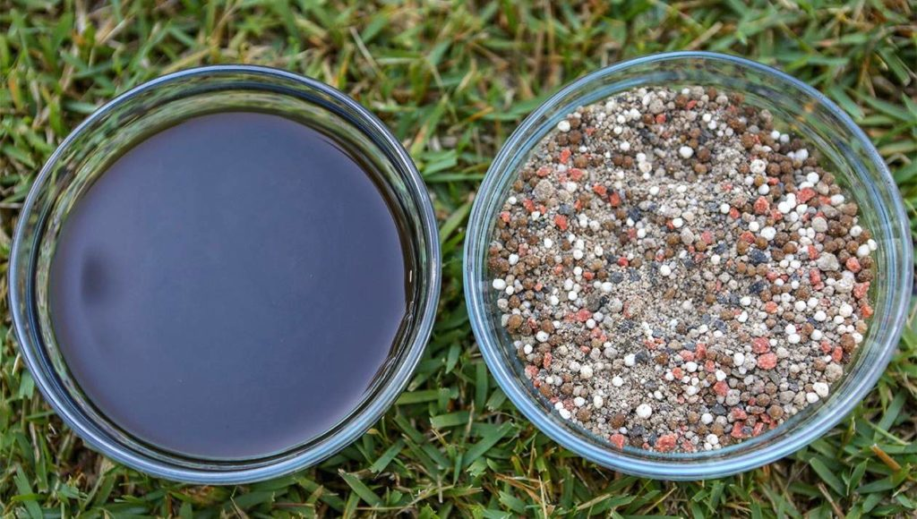 5 Best Organic Lawn Fertilizers - Make It Eco-Friendly Way