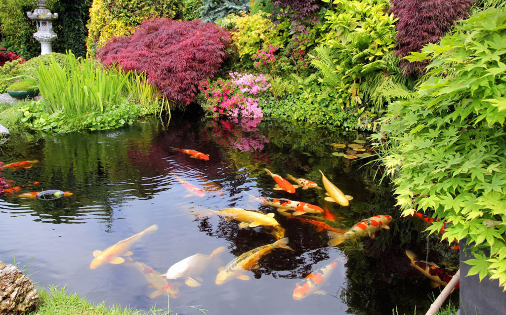5 Best Koi Pond Filters - Healthy Environment for Your Fish