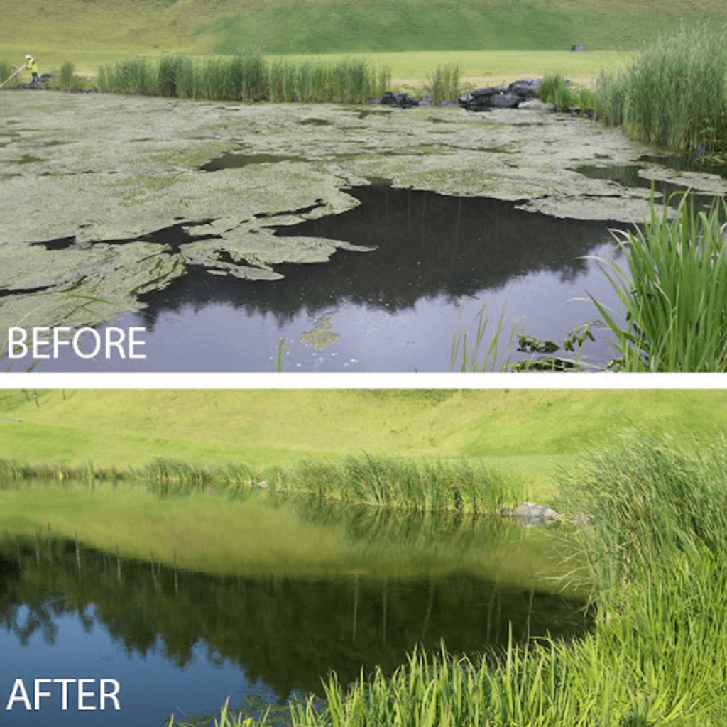 8 Best Pond Sludge Removers - You Are Stronger Than Algae!
