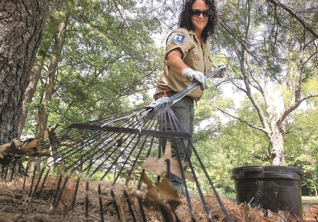 5 Best Rakes for Pine Needles - No Mess Any Longer