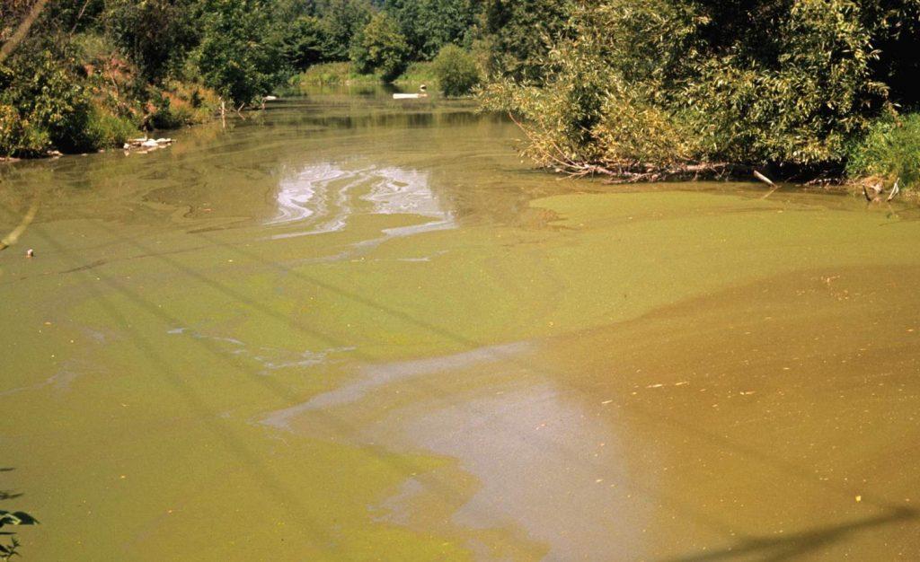 Pond Algae Control - Make Water Clean