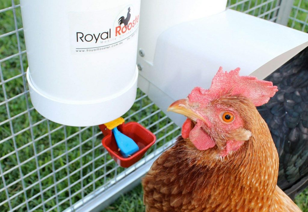 8 Best Chicken Waterers - No More Worries With Watering!