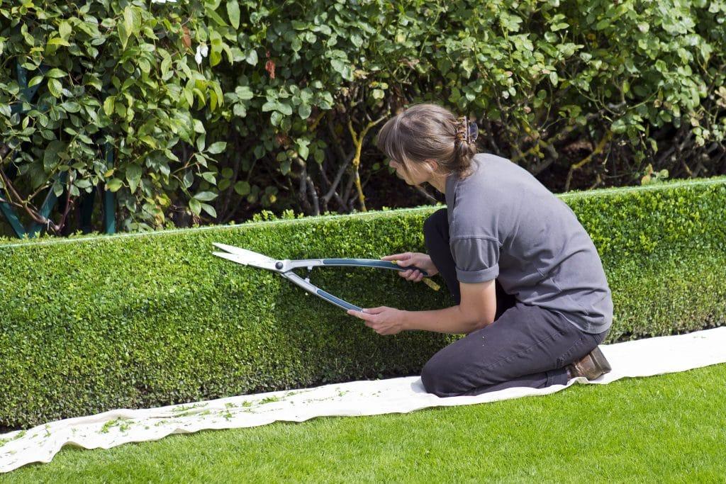 8 Best Hedge Shears - Shape Your Garden