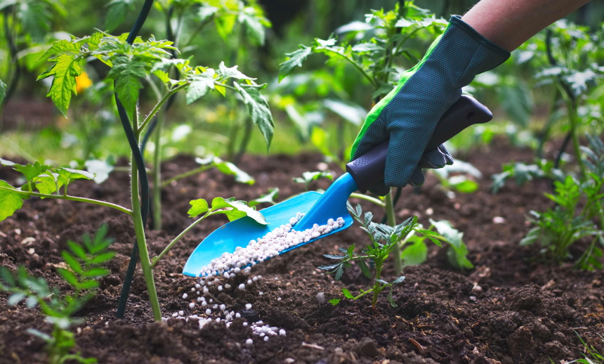 10 Best Fertilizers for Tomatoes – Healthy Plants and Juicy Fruits!