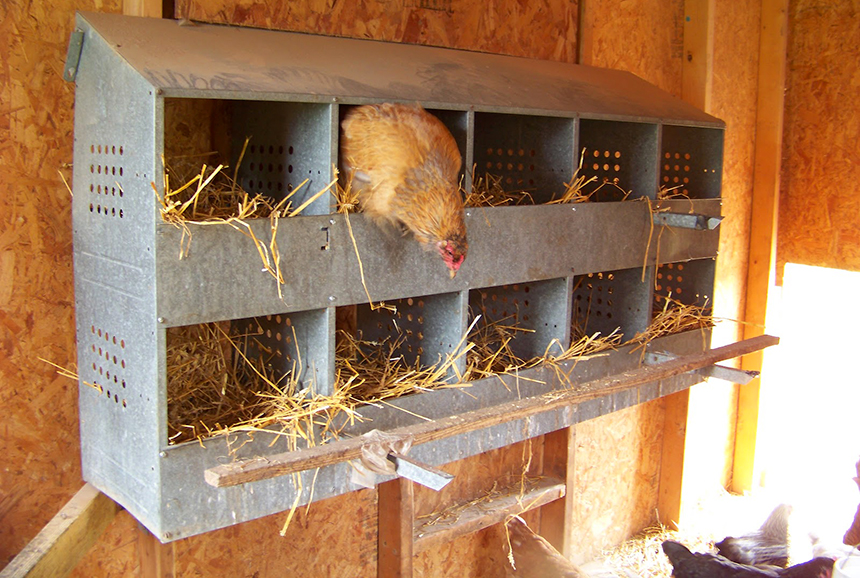 6 Best Chicken Nesting Boxes - Your Way To Clean And Unbroken Eggs
