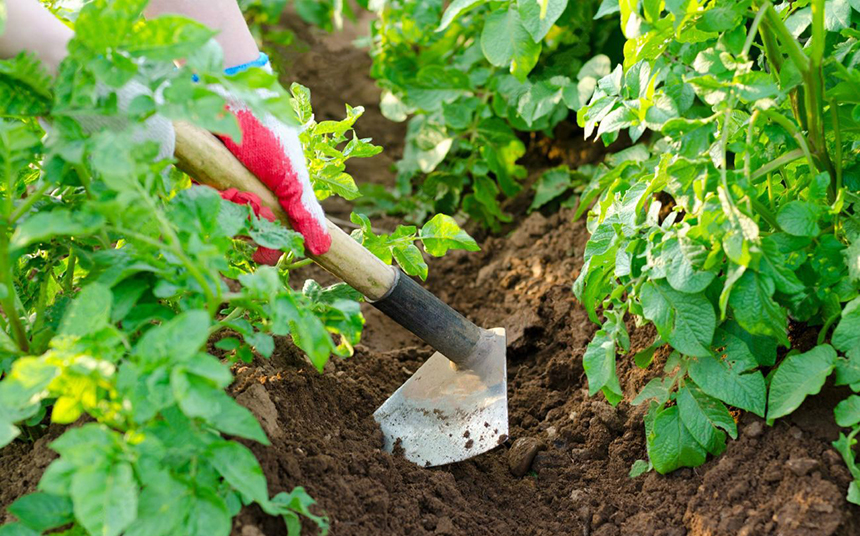 10 Best Garden Hoes Versatile – Tools for Everyone's Needs!