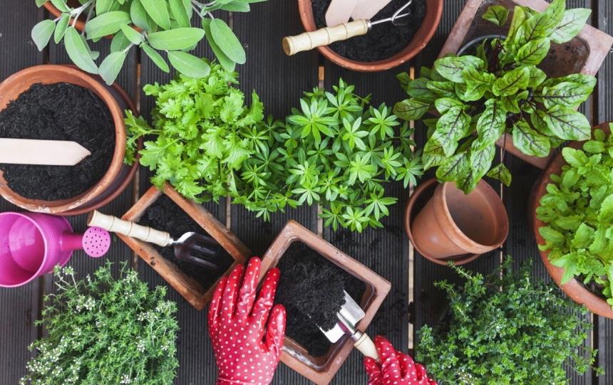 6 Best Soil Mixes for Herbs – Create Your Indoor Herb Garden!