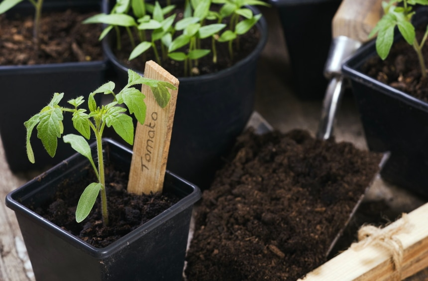 10 Best Soil Mixes for Tomatoes – Rich Harvest Guaranteed!