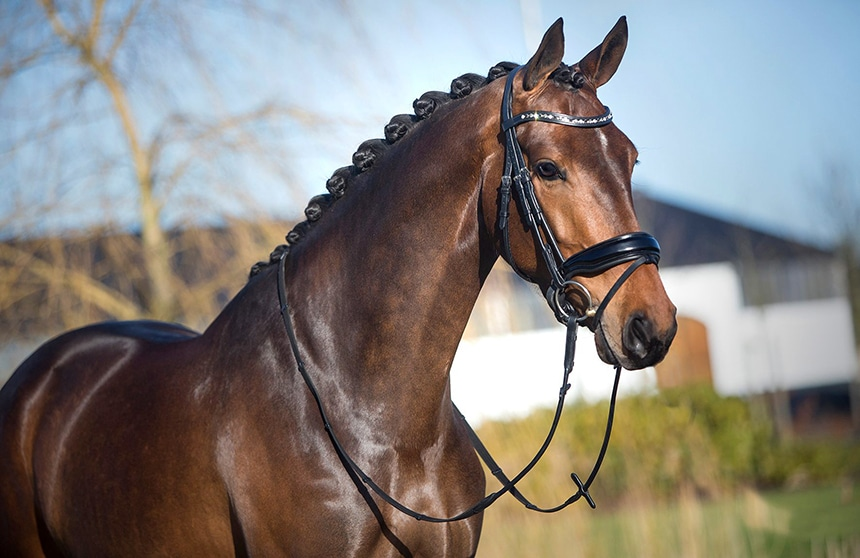 3 Best Anatomical Bridles - Comfort of Your Horse Is The Priority