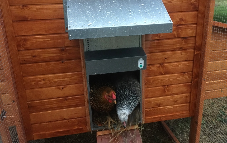 5 Best Automatic Chicken Doors to Keep Your Birds Safe