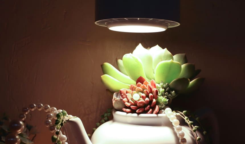 10 Best Grow Lights for Succulents – Help You Plants Grow Healthy!