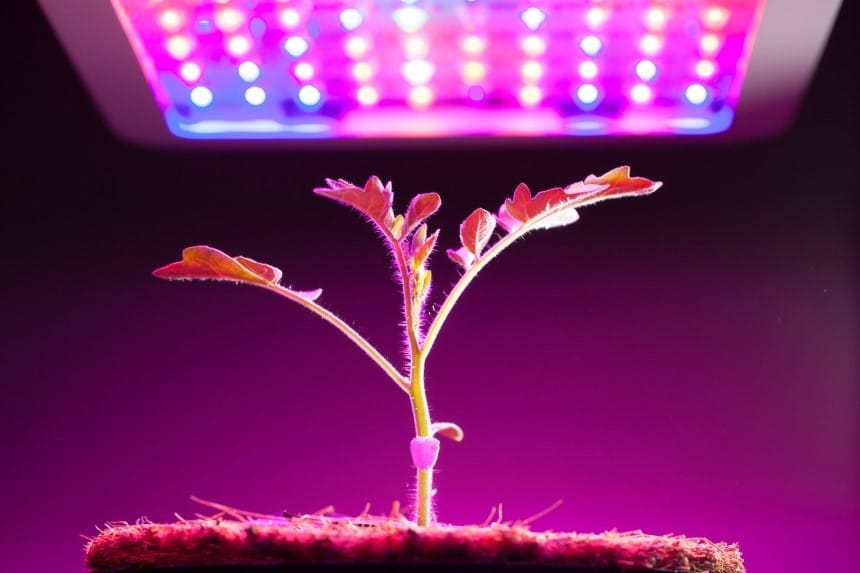 10 Best Grow Lights for Vegetables – Smart Way to Increase Your Harvest!