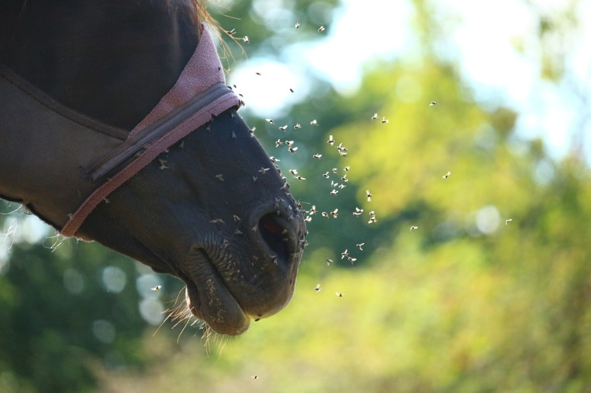 6 Best Fly Masks for Horses to Keep Their Eyes Safe
