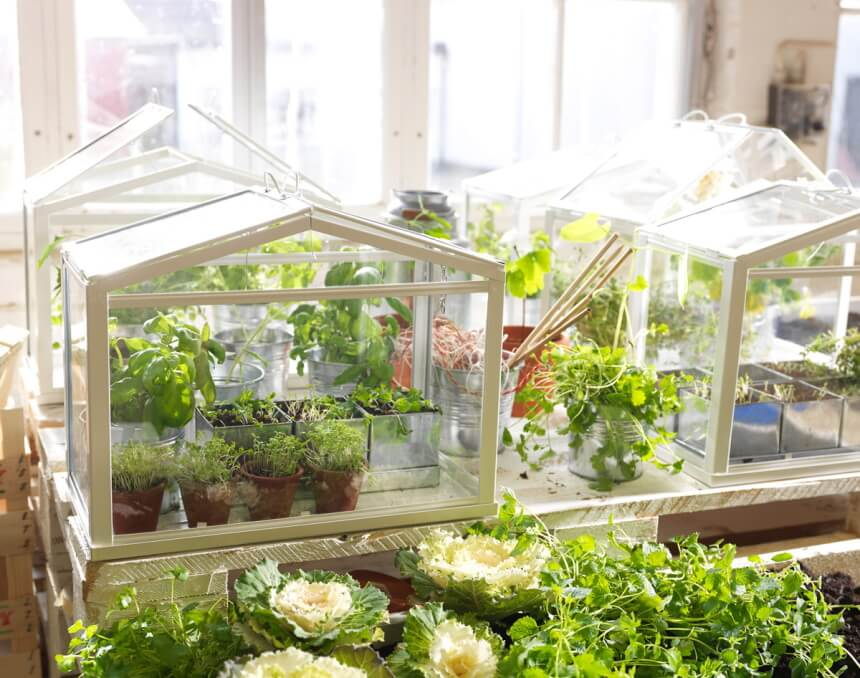 Top 7 Indoor Greenhouses – Grow Your Plants in Safer Environment!