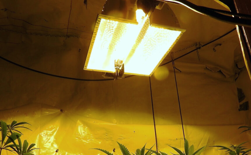 5 Best Plasma Grow Lights - Incredible Technology for Your Plants