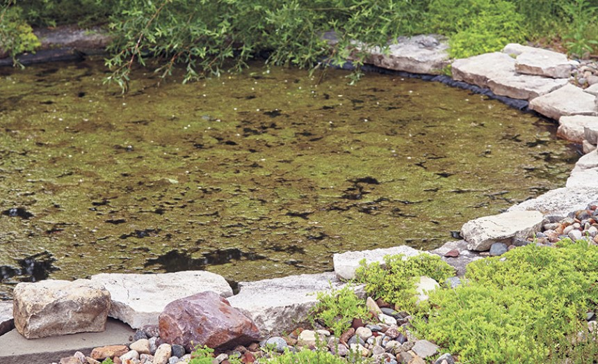 How to Clean a Pond Without Draining It