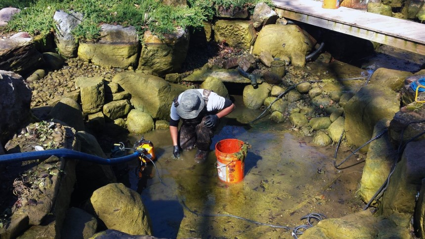 How to Clear Murky Pond Water in Just 4 Easy Steps