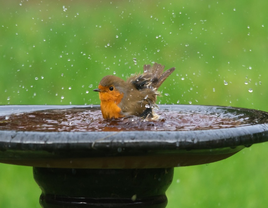 How to Get Rid of Bird Poop on Your Patio and Keep Birds Away