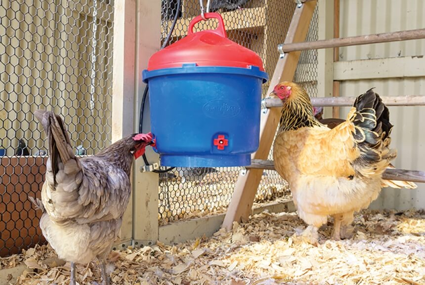 How to Insulate a Chicken Coop and Prepare It For Winter