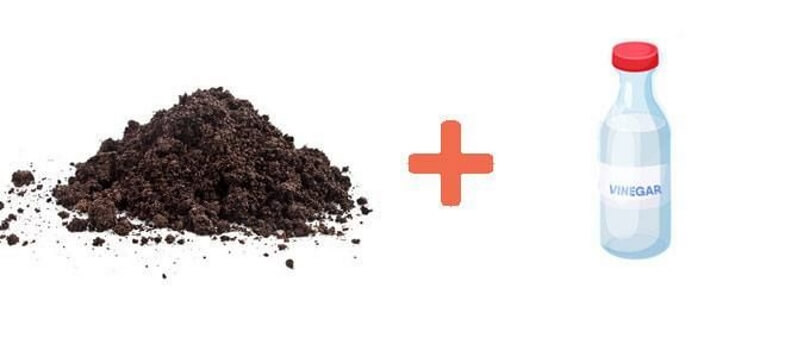 How to Lower pH in Soil with Vinegar