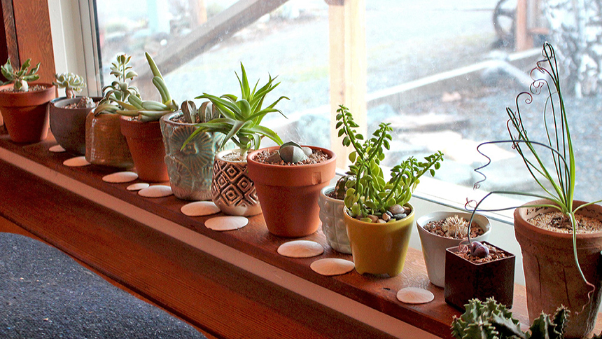 How to Grow Succulents from Seeds Step by Step