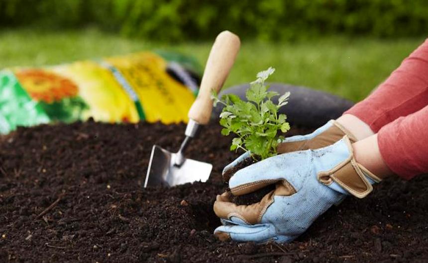 Potting Soil vs Garden Soil: Choose Wisely!
