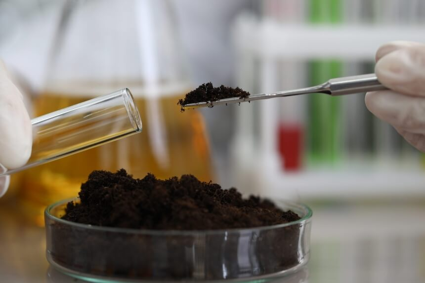How to Sterilize Soil: Tips from Professionals!