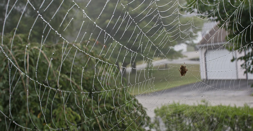 How to Keep Spiders Away from Patio: They Won't Return!