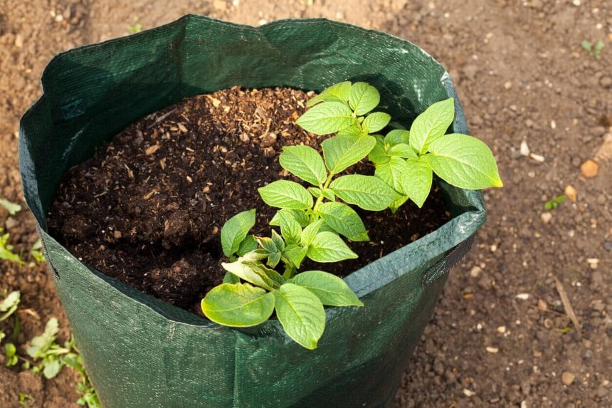 Top 5 Best Grow Bags for Vegetables and Plants