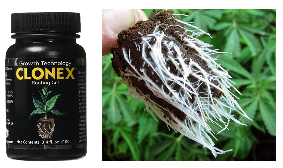 5 Best Rooting Hormones Every Gardener Should Have